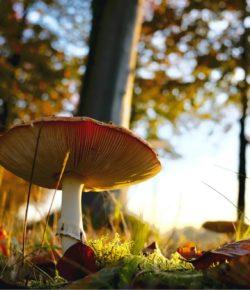 S houbami rostl zájem i o atlasy. Češi nezanevřeli na knížky do kapsy